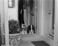 Well-behaved dogs at the art gallery (Jim Grey) Tags: columbus ohio usa unitedstates