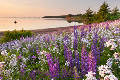 TPEI014_JS_Summer_Stock_3112_S (TourismPEI) Tags: sunset seascape nature water june landscape outdoors photography boat fishing scenic bayview princeedwardisland wildflowers activity pei tranquil 2014 outdooractivities johnsylvester lupinsanddamesrocketblossoms