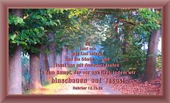 Hinschauen auf Jesus / looking to Jesus (Martin Volpert) Tags: jesus bibbia bibel christus glauben christentum bibelverskarte lookingto mavo43 hinschauenauf