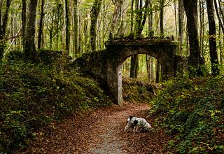 An old gate arch at Curragh Chase