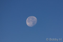 November 8, 2014 - The setting moon in the morning. (Bobby H)