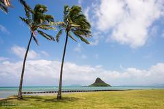 Palm trees and islands (kit) Tags: hawaii oahu kualoaregionalpark