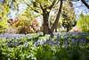_MG_3711 (TobiasW.) Tags: spring frühling fruehling garden gardenflowers gartenblumen gärten garten blue mountains nsw australien australia backyard public