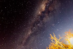 Bush pointing to the milky way galaxy (markdescande) Tags: night nature stars starfield darkness space star light background astrology outdoor dark astronomy sky backdrop nebula wallpaper universe black cluster galaxy creation abstract constellation hogsback easterncape southafrica zaf