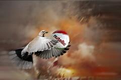 Il numero UNO (Zz manipulation) Tags: art ambroswioni zzmanipulation tortora uccello pallone stadio portiere colore rosso