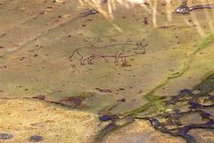 Toro (A. Mallén) Tags: arte quechua grabados montañas toro