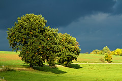 Lichtblick ....:-) (gutlaunefotos ) Tags: wetter bume eiche gras grn natur naturschauspiel licht glck