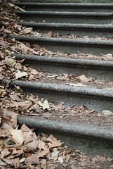 Bishop's Park, London, United Kingdom (Tiphaine Rolland) Tags: 2016 nikond3000 nikon d3000 1855mm 1855 london londres unitedkingdom uk royaumeuni england angleterre gb grandebretagne greatbritain bishopspark parc park stairs escaliers marches steps automne autumn feuilles leaves