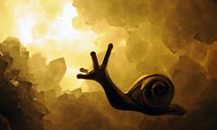 lumaca (Roberto Gramignoli) Tags: lumaca cristallo cristalli minerali minerale pietra pirtre stone stones mineral snail
