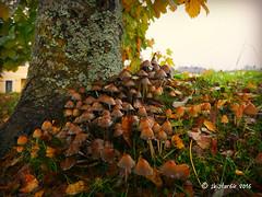 Herbstgre (skistar64) Tags: herbst autumn fall natur nature farbenpracht colours daham drausen outside outdoor pisweg krnten carinthia