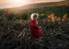 Changing Tides (Sonya Adcock Photography) Tags: girl child kid photography childphotography light evening glow warm family painterly portrait ray poetry poetic story nikon nikond700 nikkor nikkor105mmdc childhood fineart fineartphotography painting art sonyaadcockphotography autumn fall leaves color cornfield