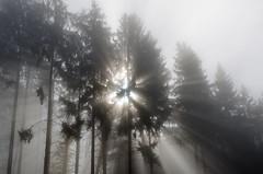 20161030-WOL_7736.jpg (viennalinux) Tags: spaziergang nebel herbst nature tauern fog natur ossiach ossiacher