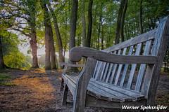 Bankje in bos (Werner Speksnijder) Tags: bankje bos kasteelgroeneveld baarn