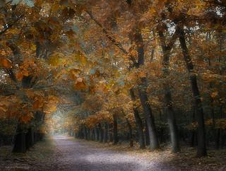 Finally autumn