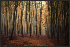 auf dem Weg zur Müritz (NPPhotographie) Tags: nature art creative oberberg npp tree wood forest autumn fall evening magic magical leaf way path fog mist dust elitegalleryaoi bestcapturesaoi