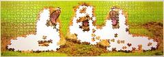 Lwen-Trio (Leonisha) Tags: puzzle jigsawpuzzle unfinished