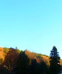 SCHRAMBERG IM SCHWARZWALD (ehbub@yahoo.de) Tags: schwarzwald tannenbaum laubbaum herbst