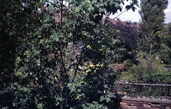 img223 (foundin_a_attic) Tags: april 1973 street houses homes fashion eveyday life england suburbs garden tree wall