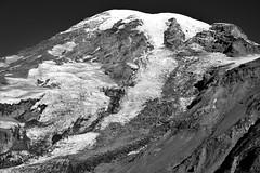 Glaciers and Snowfields Draped Across the Mountainside (Black & White, Mount Rainier National Park) (thor_mark ) Tags: 14158feet 4315meters blackwhite blueskies capturenx2edited cascaderange colorefexpro columbiacrest day4 gibraltarrock glacier glaciers hikingupthesideofmountrainier lookingnnw mountrainier mountrainierarea mountrainiermassif mountrainiernationalpark mountains mountainsindistance mountainsoffindistance nature nikond800e nisquallyglacier pacificranges pointsuccess portfolio project365 skylinetrail snowcapped southwashingtoncascades stratovolcano trailsaroundparadiseinn triptomountrainierandcolumbiarivergorge wa unitedstates