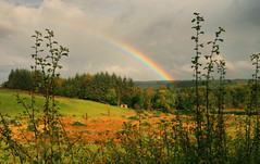 Rainbow near Galloway (Andy Watson1) Tags: rainbow galloway forest national park ayrshire scotland scottish uk united kingdom great britain british wedding hut house wood woodland hedge tree trees grass green light clouds cloud cloudy sunny sunshine sunlight sunlit lighting october autumn autumnal rain rainy weather fall travel holiday trip canon 70d sigma landscape view scene scenic scenery countryside nature natural beautiful colour colourful red yellow blue violet photo photograph photography andy watson outdoor outside blairquhan straiton saturation saturated