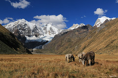 Mules et Jirishanca (HimalAnda) Tags: jirishanca andes pérou peru montagne mountain ânes donkeys mules glacier neige snow ciel sky canoneos70d eos70d stéphanebon paysage landscape