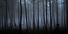 Interface (david49100) Tags: 2016 maineetloire seichessurleloir arbres d5100 décembre nikon nikond5100 trees