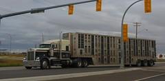 Vernla (jr-transport) Tags: kenworth cattle hauler bull w900l w900 custom