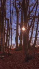 In the wood (Enrico Cusinatti) Tags: albero enricocusinatti italy nature natura vegetazione alberi bosco raggi sole sun wood rays star