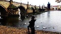 under carls bridge (my lala) Tags: prague praha prag czech carls bridge autumn mylala birds peaceful vltava girl