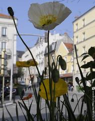 Fleurs en ville (Fontenay-sous-Bois - Officiel) Tags: fontenay fontenaysousbois regionparisienne valdemarne iledefrance 94 94120 banlieue paris fleurs flower outside nature