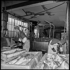PEM-STO-00152 Helge Richardsen fryseri (Perspektivet Museum) Tags: stokmosamlingen mai workers 1960årene fabrikkarbeid 60s fryseri fish perspektivetmuseum menn fabrikk 1968 22mai 1960s 1960tallet fisk svarthvitt arbeidere helgerichardsenfryseri stokmofotoas fiskeindustri industriarbeidere norge stokmo hasselblad industry industri fishindustry blackandwhite tromsø fabrikkarbeidere nordnorge noreg norway norwegen troms man mann men norgenorway nor