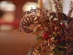 Thanksgiving Glow (smilla4) Tags: macro closup depthoffield bokeh driedflowers ferns november maine inside interior