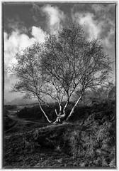 Runcorn Hill in Autumn (2 of 10) (andyyoung37) Tags: mist runcorn runcornhill cheshire england unitedkingdom gb