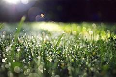 the flying flare (ΞSSΞ®®Ξ) Tags: ξssξ®®ξ pentax k5 bokeh garden lazio italy perspective depthoffield outdoor grass flare lensflares kepcorautowideanglemc28mm128 bright plant landscape field