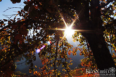 Red (Laindessiel Photography) Tags: canon1100d sun canoncamera canon liguria autumn colorful colori autunno sole shire