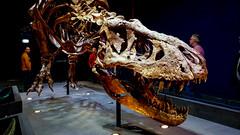 20161206_112422 (durr-architect) Tags: tyrannosaurus rex trex town skeleton naturalis nature museum leiden exhibition fossil consevation carnivorous dinosaur montana black hills institute