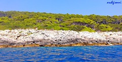 only nature (archgionni) Tags: sea adriatico rocce rocks stones alberi trees bosco wood verde green cielo sky blu blue natura nature mare riflessi reflections