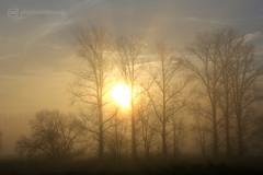 misty morning 10.12.2016 -p4d- 013 (photos4dreams) Tags: mistymorning10122016p4d winter photos4dreams p4d photos4dreamz photo rauhreif frosty rime hoarfrost landschaft landscape