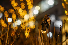 Cold winter night - Part 2 (soomness) Tags: lights light bokeh bokehlicious night nightphotography lowlight sony zeiss a7m2 a7ii aonya7ii sonya7m2 sonnar5518za carlzeiss nature leaves leaf colors winter 2017 sparkling