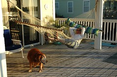 Indian Pass, FL Vacation rental (rjbowin) Tags: beach dogs island florida mary cody indianpass bowin stvincentpoint vacationrenta starlightbythesea