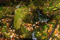 GSMNP Mt. Sterling Backpack - October, 2014 (mikerhicks) Tags: usa fall geotagged unitedstates hiking northcarolina backpacking ola waynesville greatsmokymountainsnationalpark gsmnp crestmont baxtercreektrail canon7d sigma18250mmf3563dcmacrooshsm geo:lat=3573717069 geo:lon=8311503772