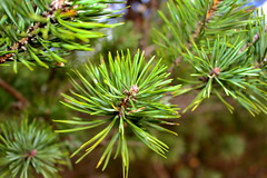 Forest (kajsatoresson) Tags: tree green fall sweden seeds lush