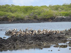 Galápagos - Isabela-121