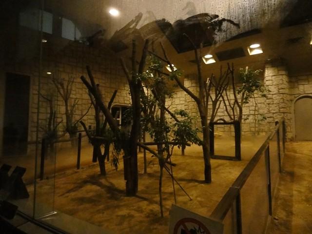 東山動物園の人気者!コアラ館へ|名古屋市東山動植物園