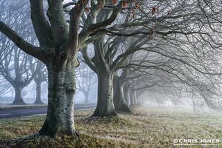 Misty start at Beech Tree Avenue