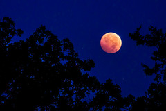 Through The Trees (brad tammaro -- photo stories inc.) Tags: blue moon landscape eclipse blood astrophotography lunar