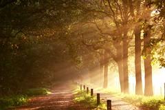 De Kaaistoep - near Tilburg (Hornplayer) Tags: autumn netherlands sunrise herbst herfst thenetherlands autumncolors tilburg herbstfarben beamsoflight autumnimpressions kaaistoep