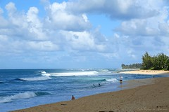 10132014_ns006_ (ALOHA de HAWAII) Tags: ehukaibeachpark alsoknownasbanzaipipelinenorthshore