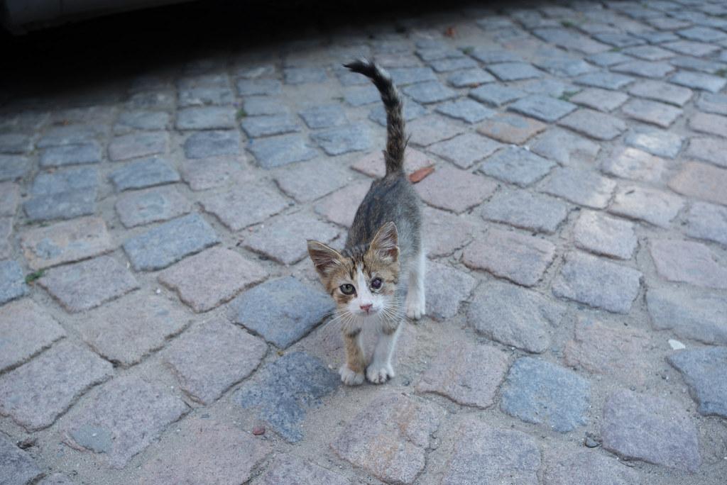 Bin Cat