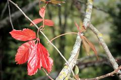 autunno a Caprese Michelangelo (fotografia per passione) Tags: tuscany toscana toscane autunno arezzo castagna capresemichelangelo sagradellacastagna altavaltiberina
